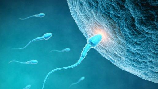Journal d'un fœtus – jour – 1 – absent dans l'indifférence